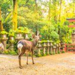 奈良県のしか
